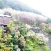 雨の京都観光。二年坂、産寧坂、そしていよいよ清水寺へ。やっぱり人多かった!